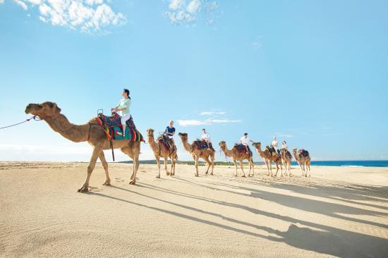 Camel Rides Sand Dunes Port Stephens